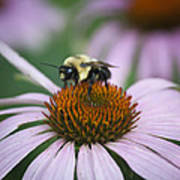 Bee Resting Squared Art Print