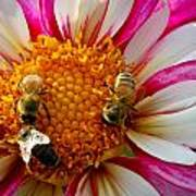Bee Time Art Print