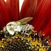 Bee Tip Toes Art Print