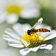 Bee With Rainbow Wings Art Print