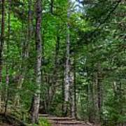 Beech Mountain Trail Acadia Art Print