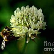 Beeflower2 Art Print