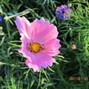 Bees Favorite Flower Two Art Print