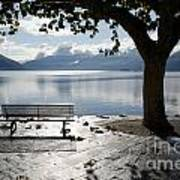 Bench And Tree On The Lakefront Art Print