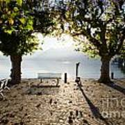 Bench And Trees On The Lake Front Art Print
