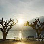 Benches And Trees On The Lakefront Art Print