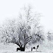 Beneath A Frosty Canopy Art Print by Mike  Dawson