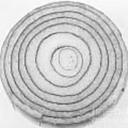 Bermuda Onion Spiral Bw Art Print