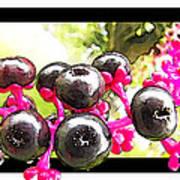 Berry Burst   Poke Berries Art Print