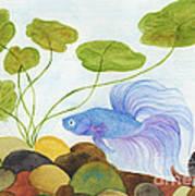Blue Betta 1 Art Print
