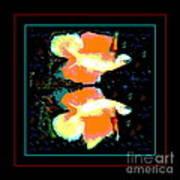 Betta Splendens X2 Art Print