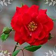 Betty's Red Rose Art Print