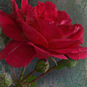 Betty's Red Rose II With Decorations Art Print