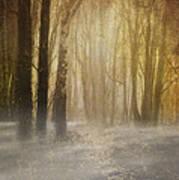 Beware Misty Woodland Path Art Print
