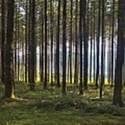 Beyond The Woods Art Print