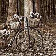 Bicycle Built For Three Art Print