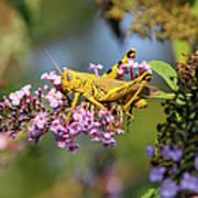 Big Yellow Grasshopper Art Print