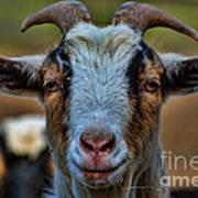 Billy Goat Art Print by Paul Ward