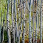 Birch Forest Art Print