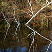 Birch Lake Reflections Art Print