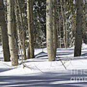 Birch Trees In Snow Art Print