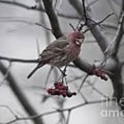 Bird And Berry 3 Art Print