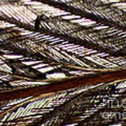 Bird Feather Art Print