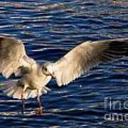 Bird Flying Art Print