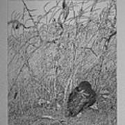 Bird In Winter Art Print