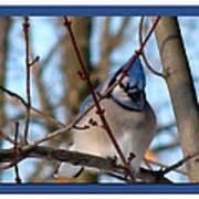 Bird Of Blue Art Print