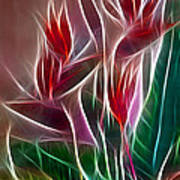 Bird Of Paradise Fractal Art Print by Peter Piatt