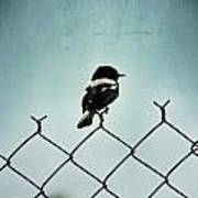 Bird On A Fence  Art Print