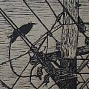 Bird On A Wire Print by William Cauthern