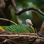 Bird On Nest Art Print