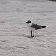 Bird On The Beach 2 Art Print