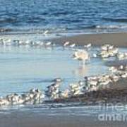 Birds And One Lone Seagull. Art Print