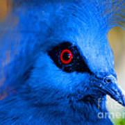 Bird's Eye View Art Print
