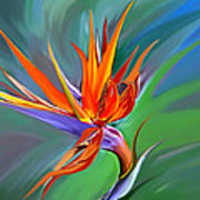 Birds Of Paradise 1 Art Print