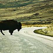 Bison Crossing Highway Art Print