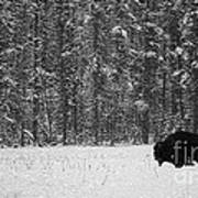 Bison In Snow Mosaic Art Print by Barry Shaffer