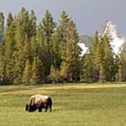 Bison In Yellowstone Art Print