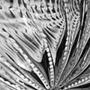 Black - White Art Print by Jan Canavan
