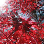 Black And Red Crescendo Art Print