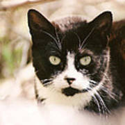 Black And White Feral Cat Art Print