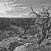 Black And White Image Of Tree Art Print