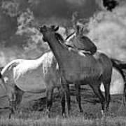 Black And White Photograph Of Montana Horses Art Print
