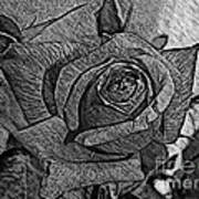 Black And White Rose Sketch Art Print