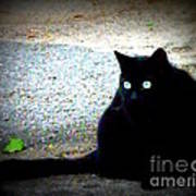 Black Cat Beauty Art Print