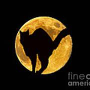 Black Cat Moon Art Print