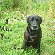 Black Lab Miss You Art Print